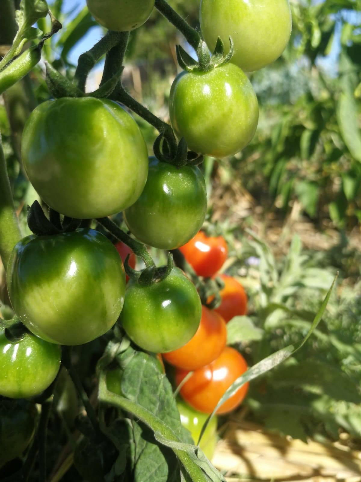 """Día Mundial de la Alimentación"""" Cultivar, nutrir, preservar. Juntos. Nuestras acciones son nuestro futuro"""""""